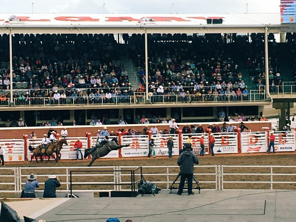 The dreamcatcheuse Calgary Stampede