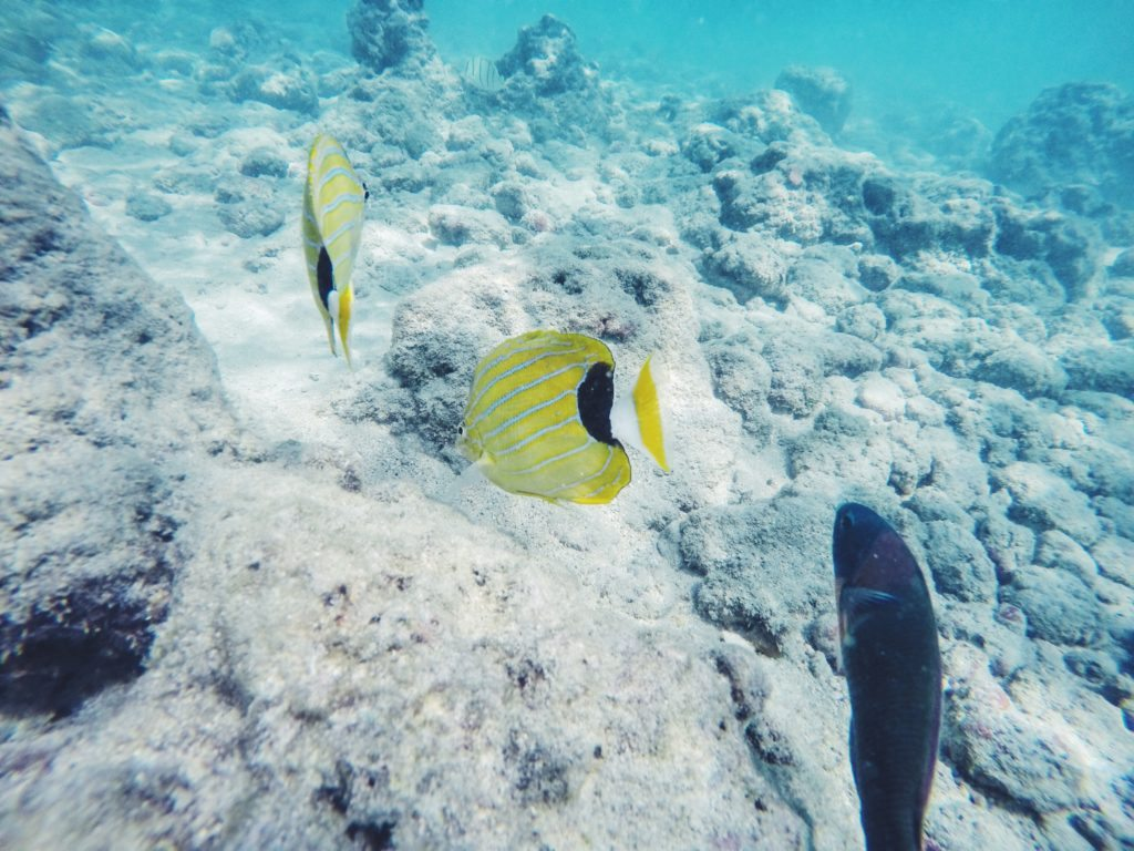 Snorkeling Hanauma Bay, Hawaii