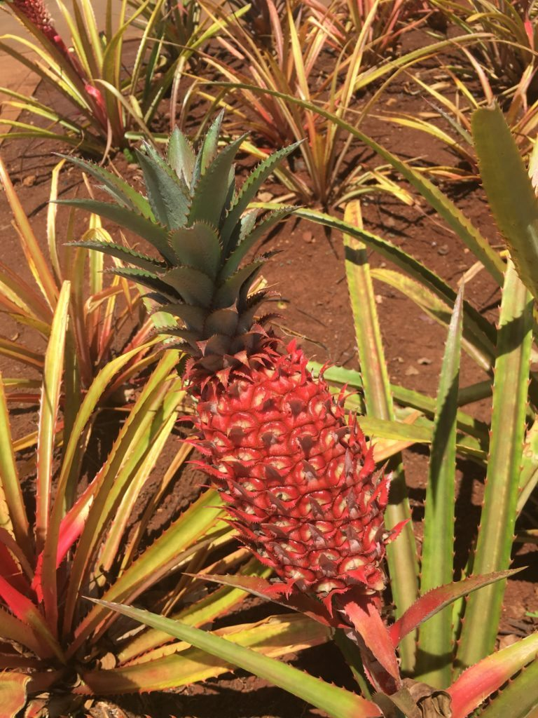 Dole Plantation, Hawaii