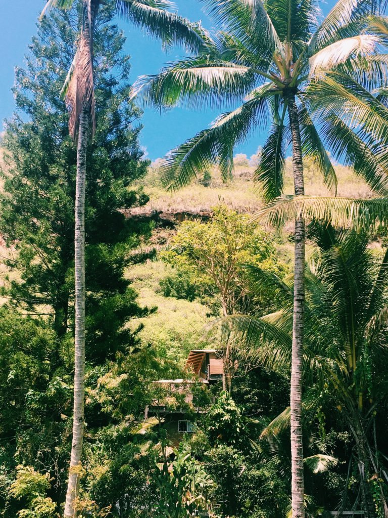 Jungle à Oahu, Hawaii